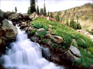 Rushing Waters of Spring, Grand Teton National Park